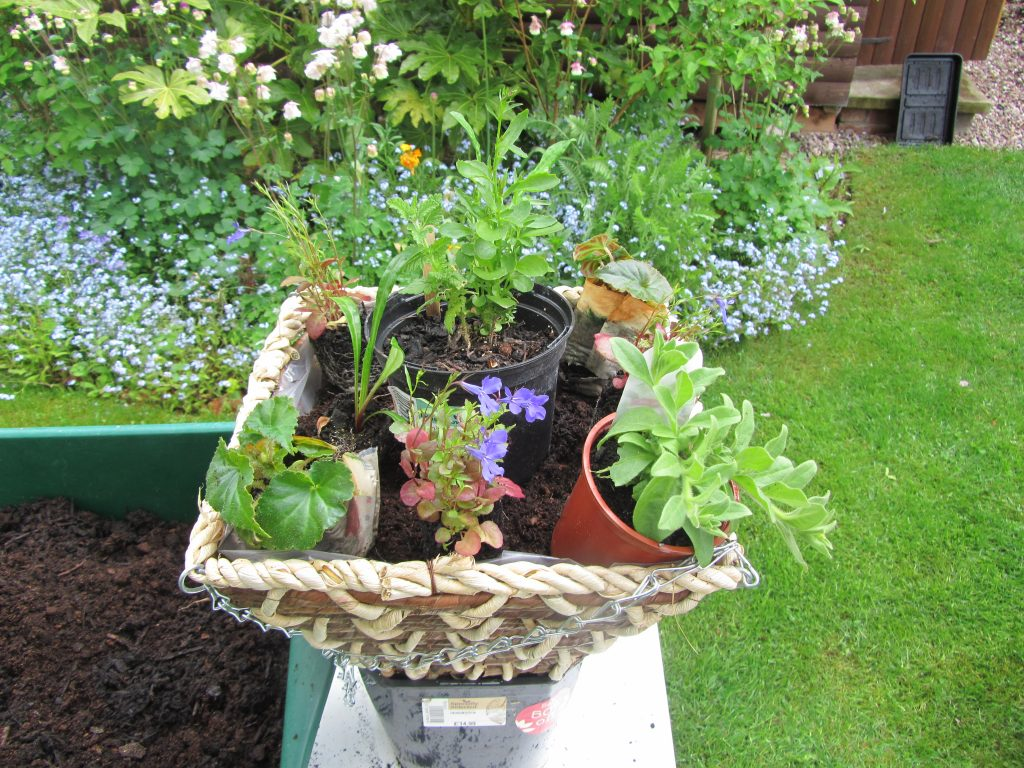 Positioning plants in hanging basket