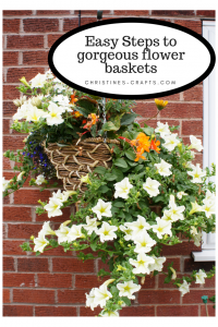 Planting hanging baskets and pots pin