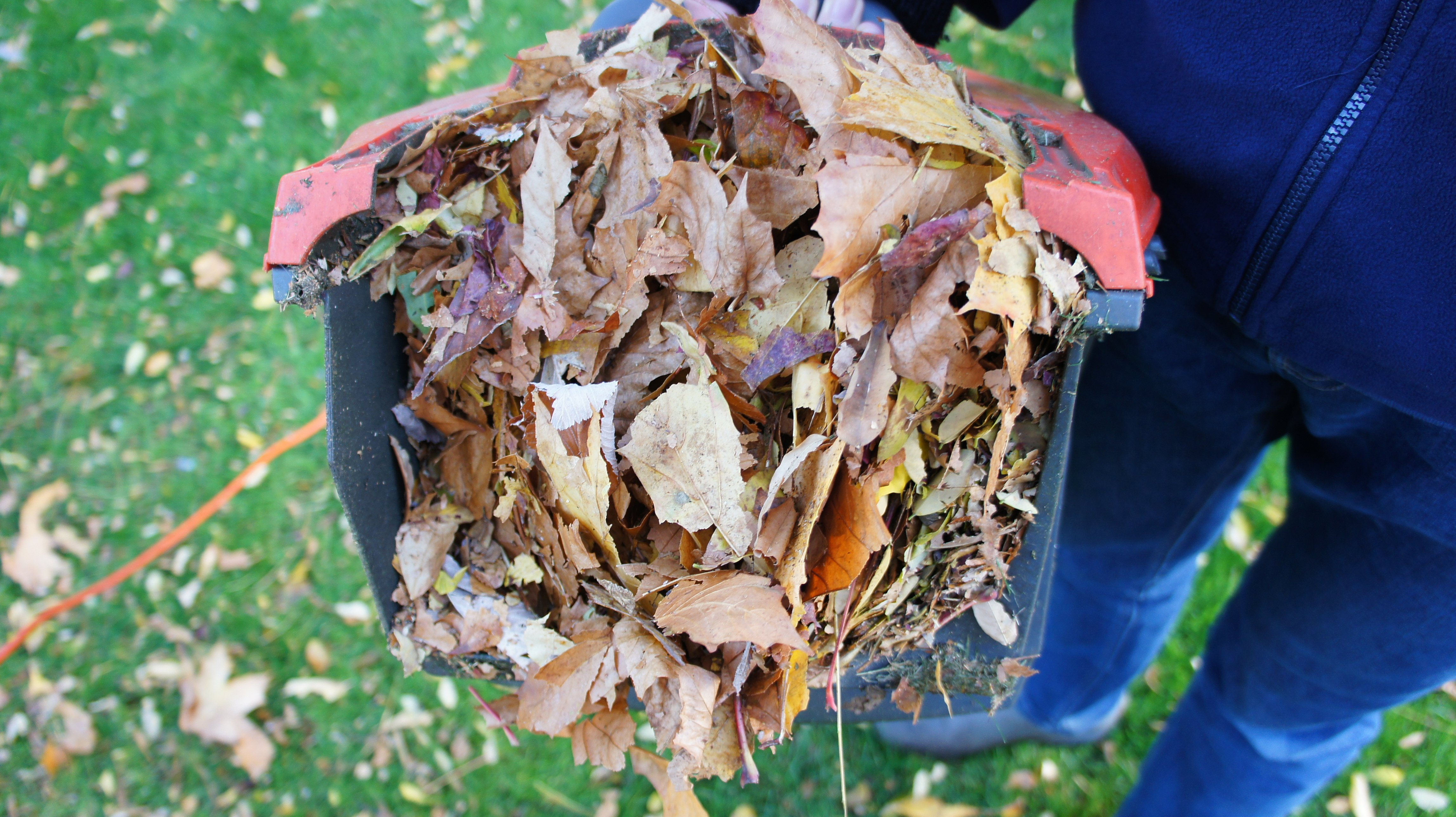 Leaf mould shredded leaves