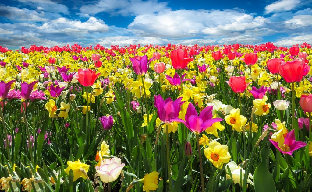 tulips and daffodils - Top 10 Garden Tasks for April
