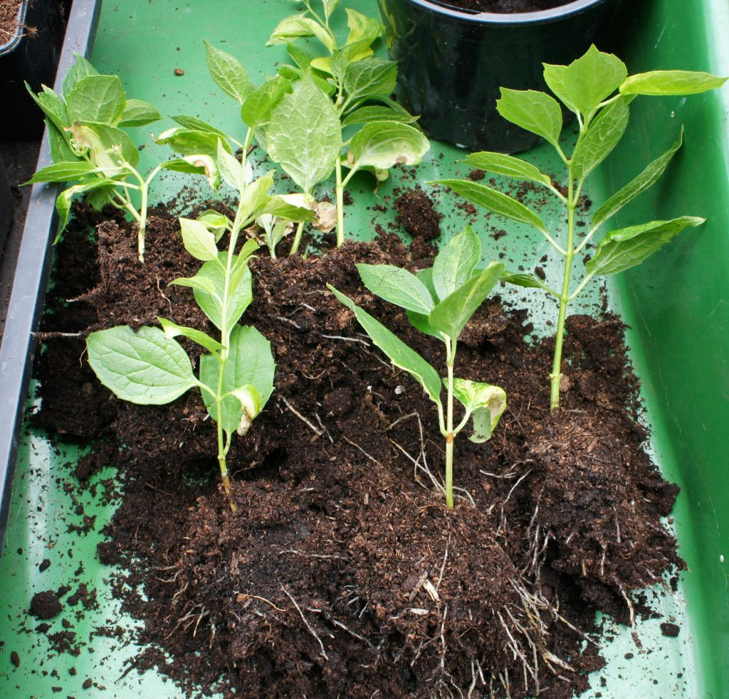 Separate cuttings