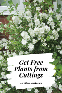 Free shrubs from cuttings